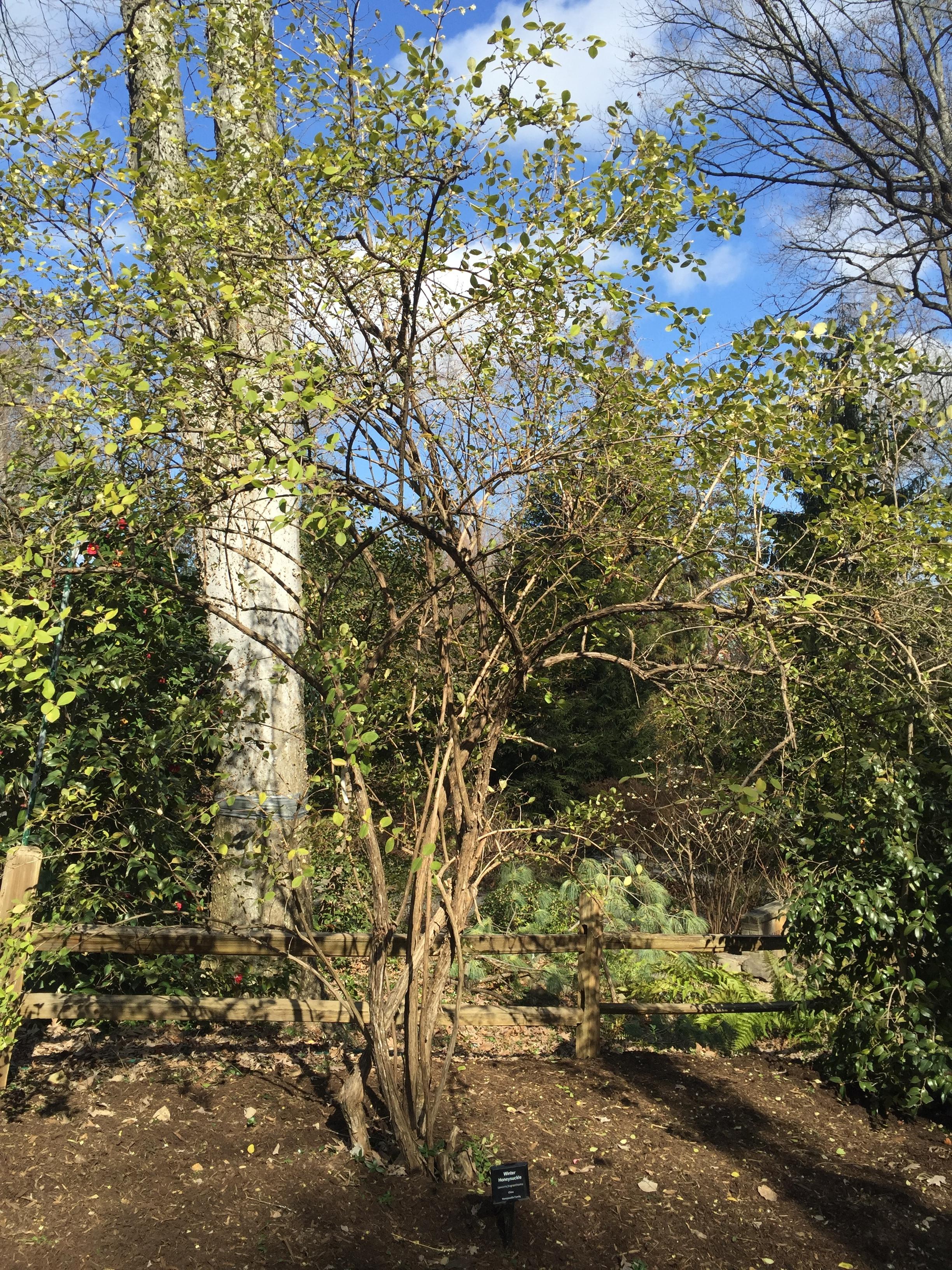 Magnificent Uncc Botanical Gardens Pattern - Brown Nature Garden ...