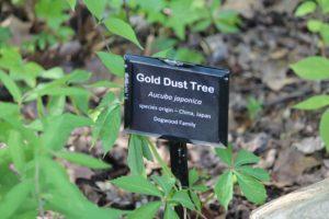 Aucuba-japonica-gold-dust-tree-hillside-label-01