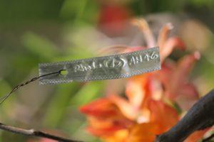 Rhododendron-azalea-azalea-hill-AH46-label-01