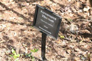 Viburnum-carlesii-sun-mosaic-north-label-01