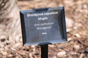 acer-palmatum-bloodgood-asian-gate-label-01