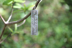 rhododendron-azalea-pavane-azalea-hill-label-01