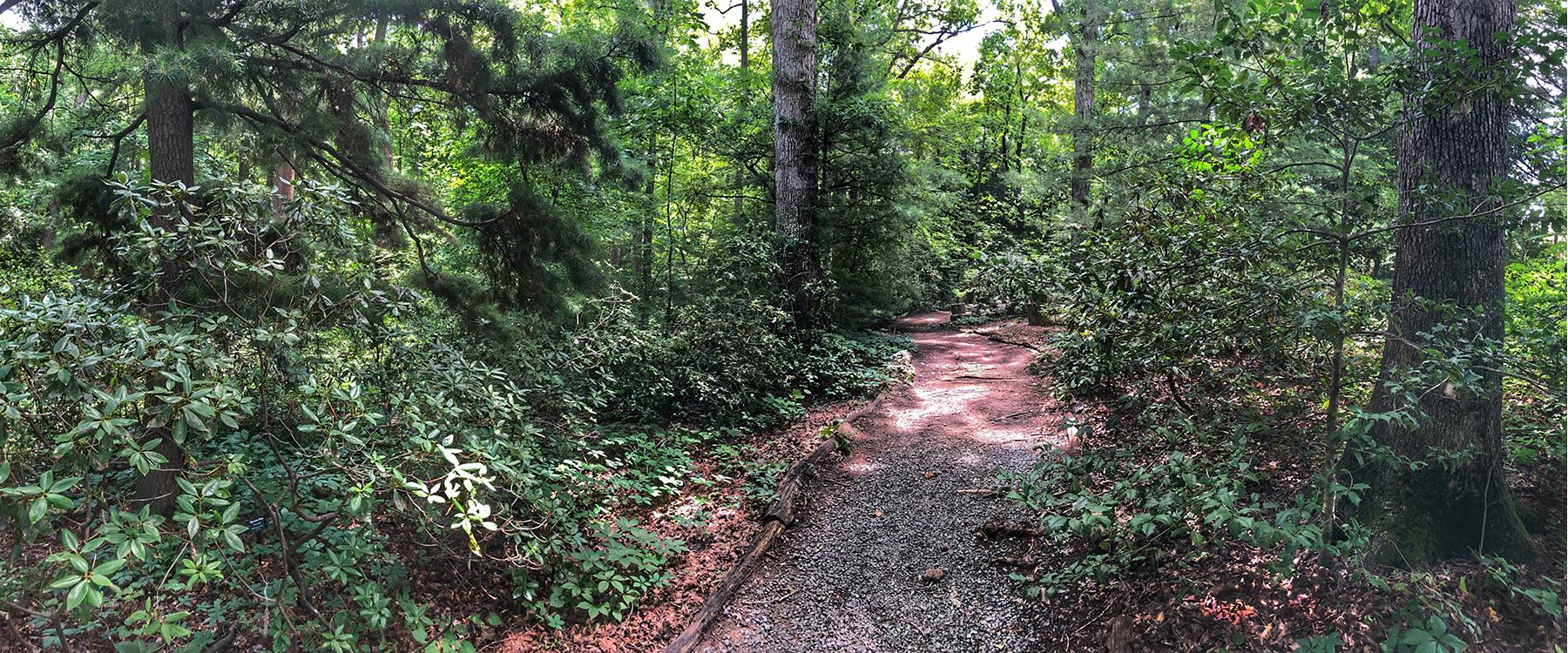 Kellum Trail